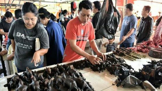 BM: Vahşi hayvan pazarları dünya genelinde yasaklanmalı