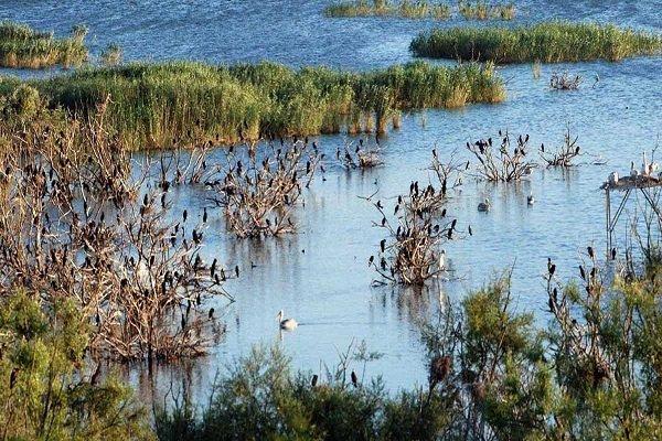 Kuş Gölü büyük risk altında!