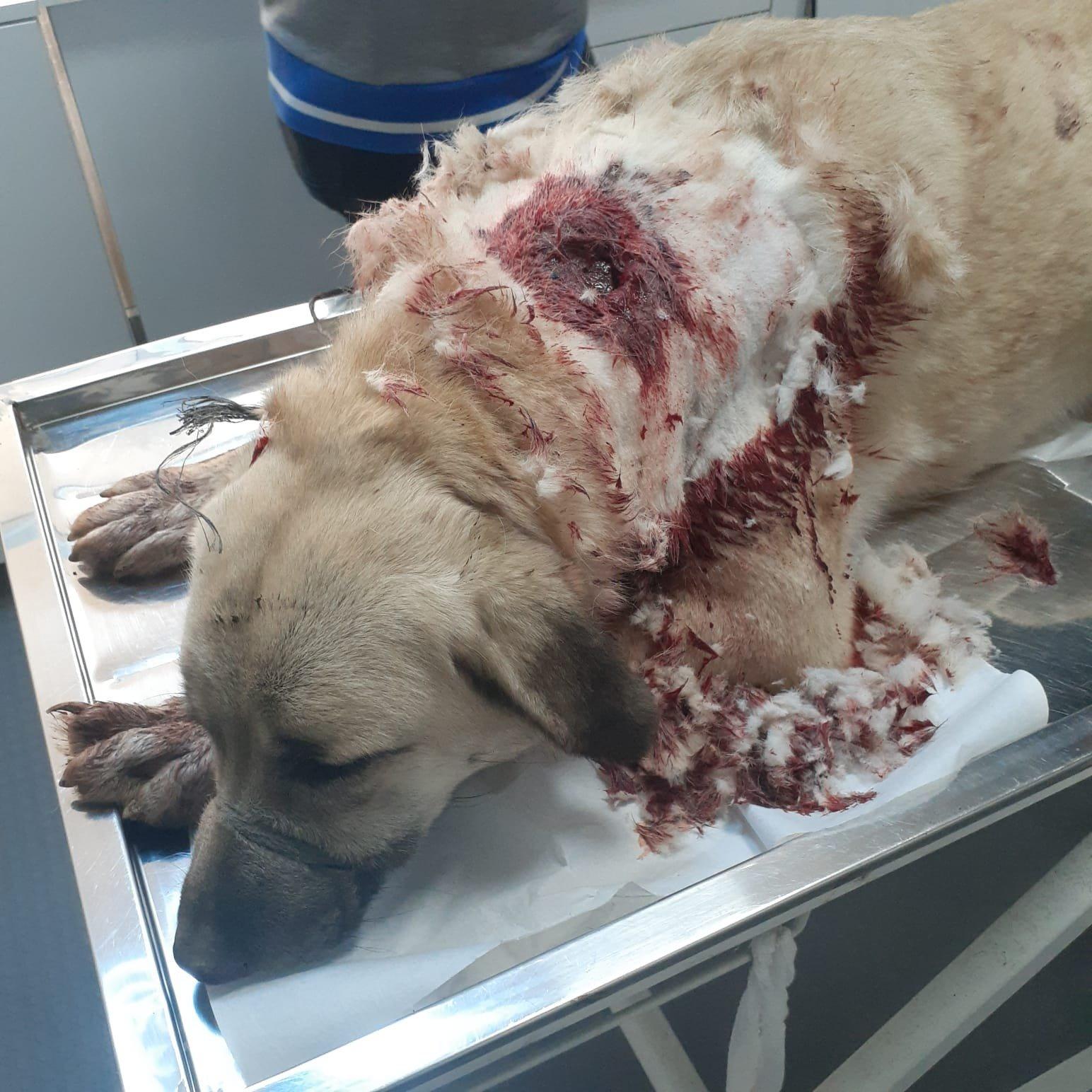 Bekçi köpeğini silahla vurdular