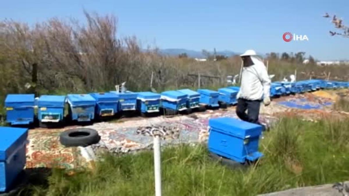 Balıkesir de bal para yapınca arıların önüne halı serdiler