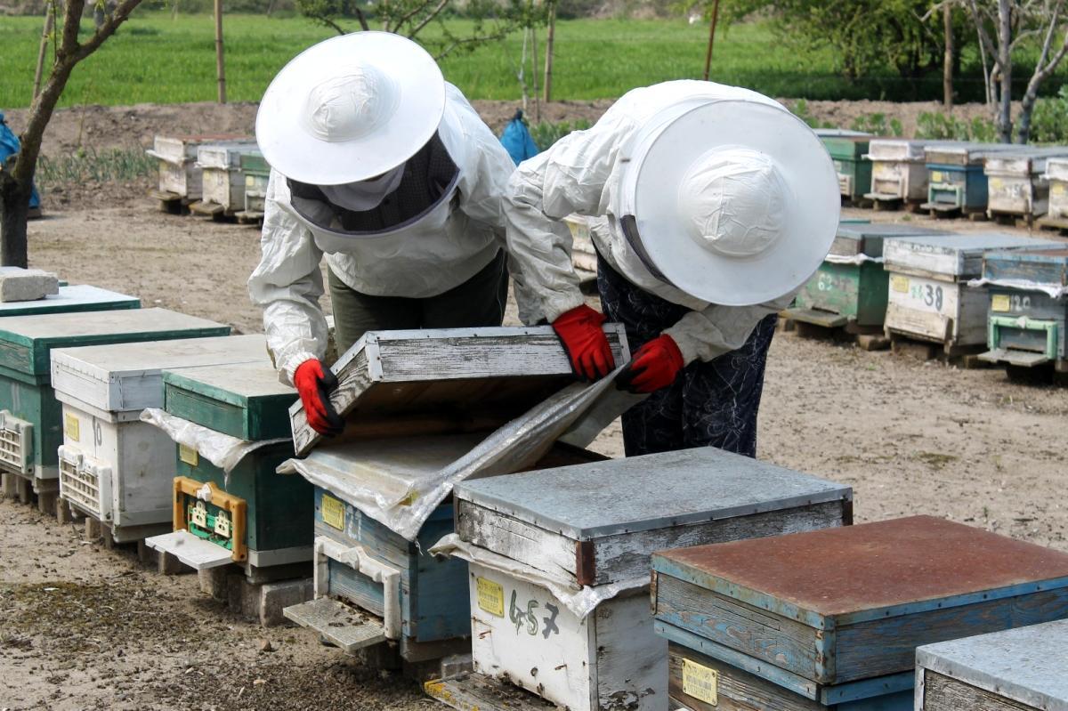 Manyas ta arılar zehirli kimyasal atık su yüzünden telef oldu
