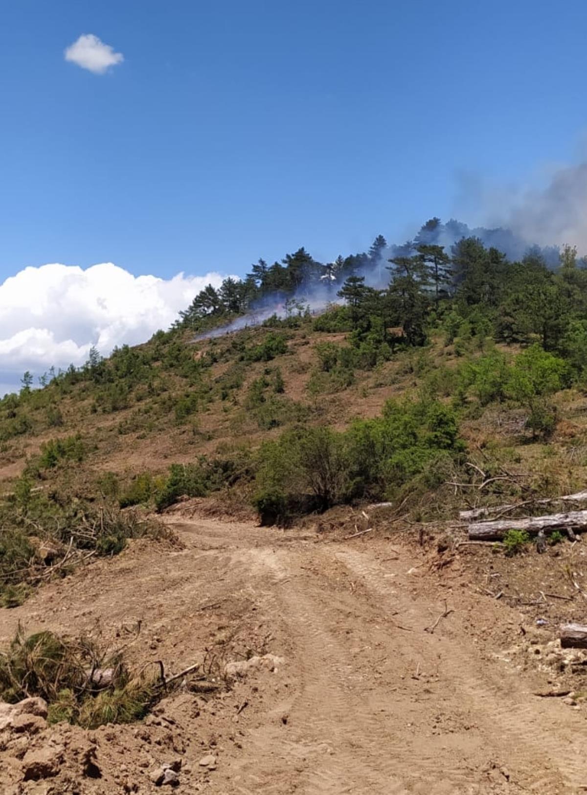 Balıkesir de orman yangını çıktı