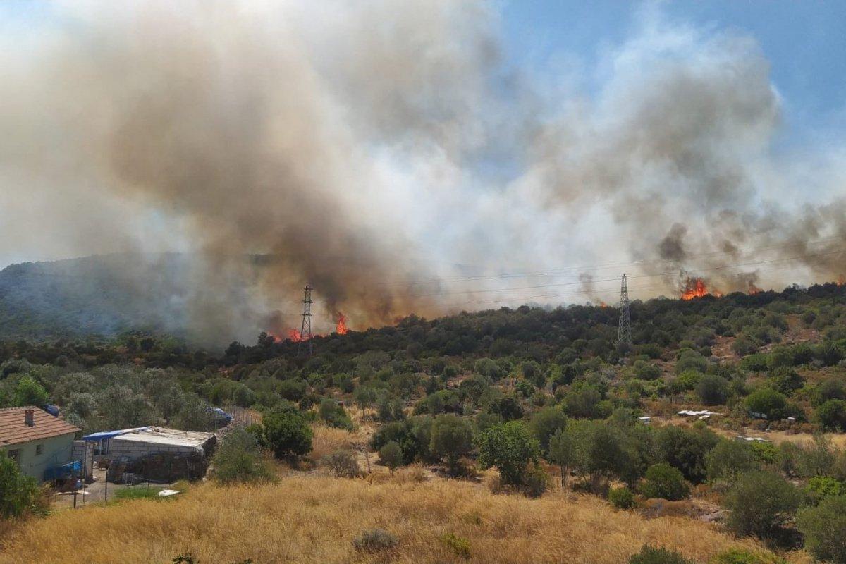 İzmir'in Urla ilçesinde yangın!
