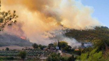 TEMA'dan açıklama: Yangınlar bitince hemen ağaçlandırma yapılmalı mı?