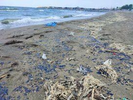 Suriye'deki petrol sızıntısı Hatay sahillerine ulaştı